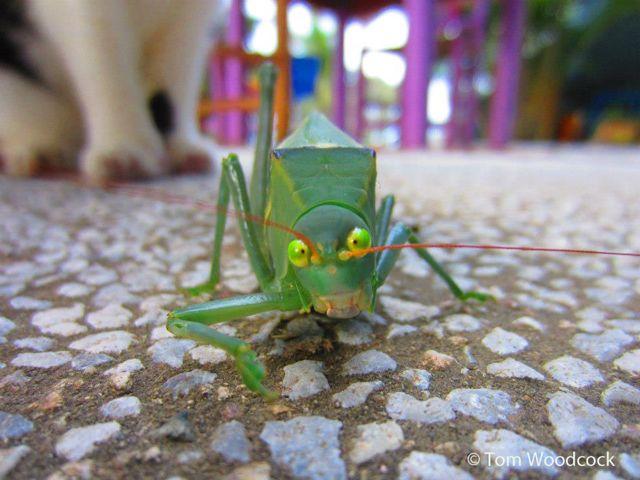 World's angriest bug by Tom Woodcock
