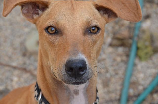 Rescue Dog Sayulita Mexico