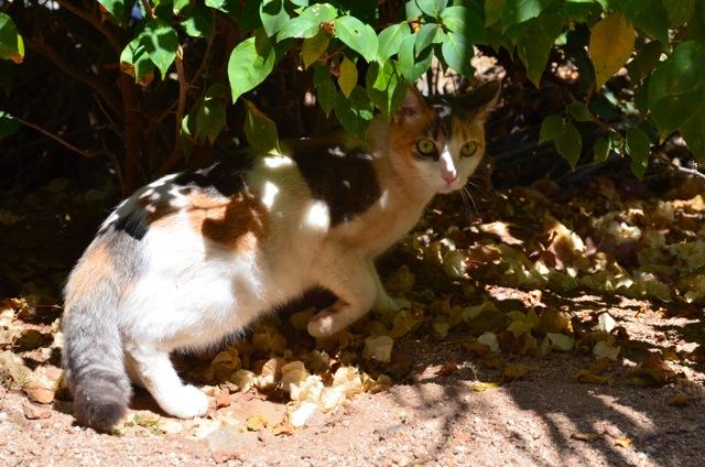 Stray cat Mexico