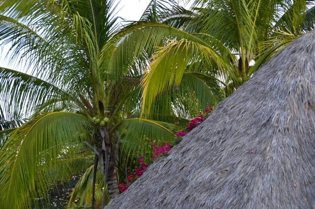 Sayulita roof