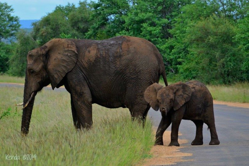 Mama and Baby Elephant at Olifants
