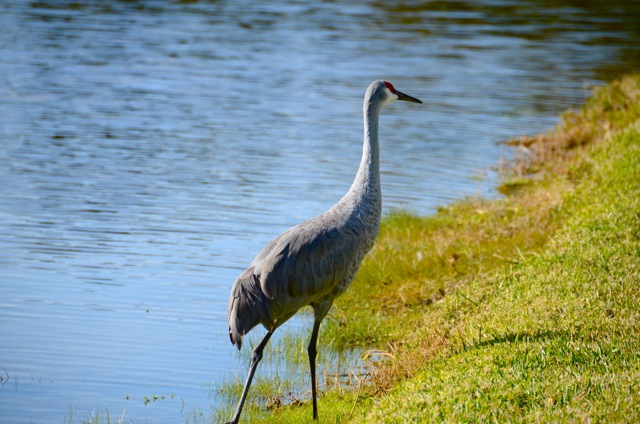 Death Comes to the Indian River Lagoon