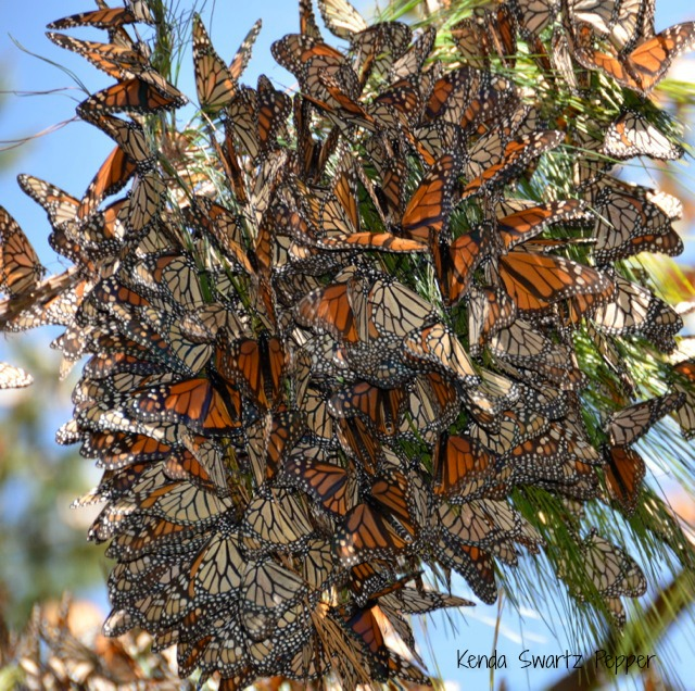 A Monarch Cluster