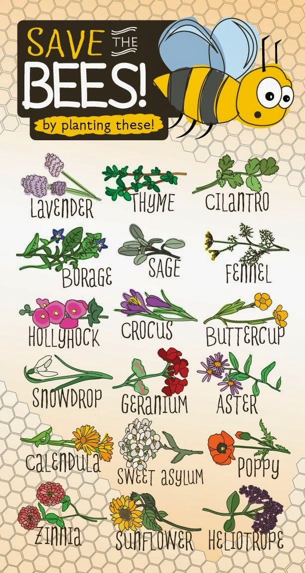 Plants that attract bees