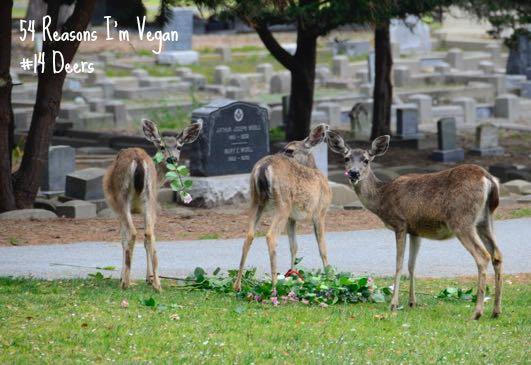 14 Deers