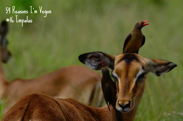 54 Reasons I'm Vegan: Numbers 12-19