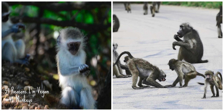 47_monkeys