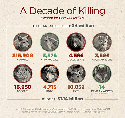 wildlife-services-kill-data