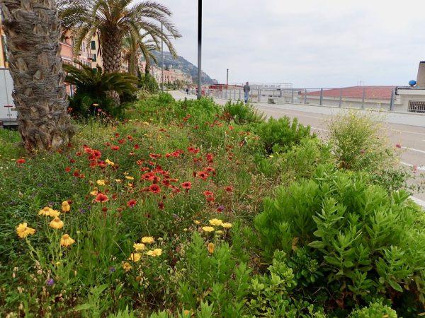 Wildflowers in great abundance
